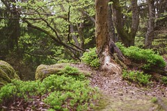 mühlviertel (Peter Wölflingseder) Tags: explore discoveraustria austria picoftheday woods mothernature planet discover planetearth alpha sony photography nature gooutthere discoverearth