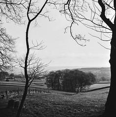 April Morning Down Country Lanes (Richie Rue) Tags: zeiss ikon nettar fomapan fomafomapan100 rodinal medium format 6x6 squareformat film analog analogue monochrome mono blackandwhite landscape trees april morning