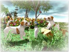 Cuteness Overload (Abi Latzo) Tags: tlc cosmopolitanevent animal secondlife sl shopping