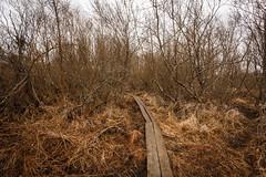 Dismal spring (SamppaV) Tags: spring dismal depressing iidesjärvi pitkospuut cpl dull finland kevät raining canon6d