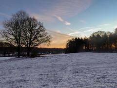 Nationaal park de Veluwezoom (Nelleke C) Tags: 2017 nationaalparkdeveluwezoom gelderland landscape landschap nederland netherlands sneeuw snow sunset veluwezoom winter zonsopkomst