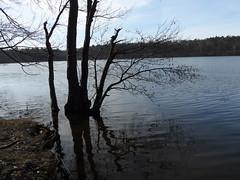 Bötzsee (kirstenreich) Tags: natur landschaften bötzsee seen gewässer strausberg germany wasser bäume seeufer ruhe stille erholung
