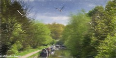 Flying Over The Lea (M C Smith) Tags: river lea water boats trees green birds flying pentax kp sky blue clouds white path brown