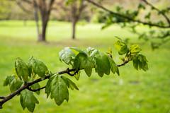 Blätter (p.schmal) Tags: olympuspenepm2 hamburg farmsenberne bernerau