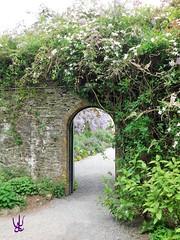 Greenway House, River Dart, Devon (daniellewootton) Tags: gate greenwayhousegardens wisteria flowersgatewayarch gateway arch flowers garden greenwayhouse devon