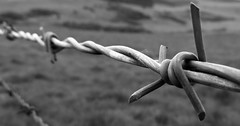 Galvanised (Jamies_pics) Tags: bw white black detail macro monochrome field grass canon fence mono wire dof steel monochromatic powershot sharp barbed depth sx40