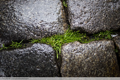 Grass in Stone, Prague (kengur8) Tags: urban 35mm prague 35l