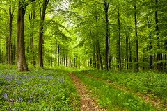 The Way Through the Woods (Terry Yarrow) Tags: uk trees light england bluebells canon walking landscape spring woods dorset greenery footpath possibles eos5d