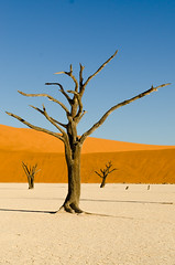 Faces of Deadvlei 3 (Gies! (back home, trying to catch up)) Tags: deadvlei namibie