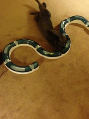 (k8southern) Tags: cats plum bluecat graycat