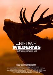 De Nieuwe Wildernis (Natuurpunt vzw) Tags: herfst reddeer lelystad rutting oostvaardersplassen cervuselaphus flv nederlandthenetherlands edelherten bronst