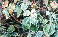 First Frost on the Blackberry Leaves - watercolor