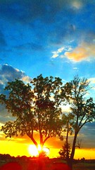 Sunset Set (Marianne Dow) Tags: cameraphone trees sunset sky cloud abstract tree art colors clouds digital landscape phone dramatic motorola mirrored impressionist android droid goldentime phoneography iphoneography androidography droidx andrography mariannedow