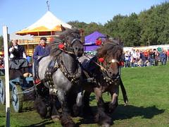 Ring Riding (Davydutchy) Tags: life 1920s horse tractor festival boer cheval 1930s country steam parade september farmer pferd optocht paard stoom platteland dampf dorpsfeest vapeur bauern nieuwehorne fermier wals 2013 nijhoarne dorsvlegel oudehorne flaeijelfeest flaeijel âldhoarne