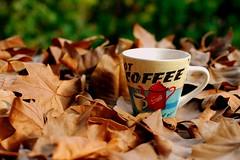 Caf de otoo (mike828 - Miguel Duran) Tags: 35mm hojas leaf cafe nikon dof bokeh dry mug otoo f18 coffe taza autumm secas tazon d40x coffeeathome cafeencasa