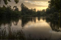 Evening by the lake. (Kieron Adams) Tags: trees sunset lake reflection yellow essex danbury