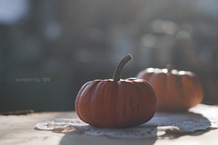 pumpkin (idni . idniama) Tags: autumn light fall luz contraluz pumpkin bokeh calabaza naranja gettyimages 2013 idni gettyimagesiberiaq3