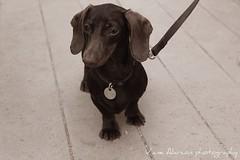 image (VaneAlarcon) Tags: barcelona dog perro mascota mejoramigo