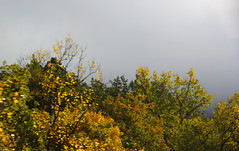 228 La Valle du Buch (Steff One) Tags: arbre brouillard hautesalpes devoluy