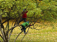 Climbing (Vidar Ringstad, Norway) Tags: autumn trees red playing cold green fall nature boys oslo norway canon eos norge natur norwegen guys climbing jacket 7d gras gutter rd gress hst bygdy trr klatre grnn leker leke kaldt jakke climbingintrees klatreitrr vision:plant=0639 vision:outdoor=0899
