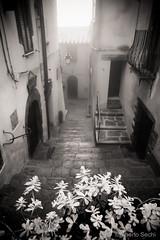 Scansano (*Berto*) Tags: flowers italy scale fog stairs fiori toscana nebbia scansano