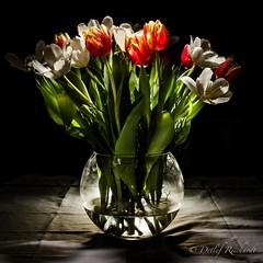 13.01.14: springtime (D.Reichardt) Tags: winter light flower nature germany spring flora europe days tulip vase 365