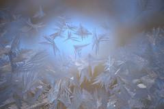 The shape of frost (Cruise93) Tags: blue winter light white cold texture ice window nature public glass silver season frozen shiny frost crystals pattern pointy background fine gray frosty minimal sparkle freeze bling icy shape angular sparse shimmer crystalline beautyinnature blurredbackgroundfrosttextureiceicycoldfrostybackgroundwinterseasonfrozenfreezebluewhitesilvergrayfinepatternnaturecrystalscrystallinesparkleglasswindowshapeangularpointybeautyinnatureshinyshimmerlightblingsparseminimal