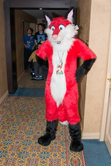 DSC_8061 (tastyeagle) Tags: furry texas fiesta fox mont 2014 fursuit tff furryfiesta tff2014