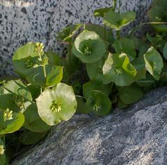 140309_3219.jpg (Weeding Wild Suburbia) Tags: park gardens publicgardens spnp