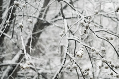submit-59 (Persons Productions) Tags: abstract background beautiful branch branches bright cold forest frost holiday landscape natural nature outdoor pine season sky snow snowed snowy tree white winter wood