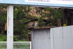 Today's Cat@2017-03-22 (masatsu) Tags: cat thebiggestgroupwithonlycats catspotting pentax mx1