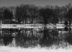Change Your Perspective (Brennan Wille) Tags: winter conodoguinet conodoguinetcreek 2017 march pennsylvania pa camphill water creek reflection blackandwhite bw trees inverted flipped symmetry brennanwille canonpowershotg12 snow winterstormstella noreaster nature landscape river cumberlandcounty 717 cold ice gray
