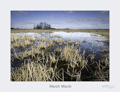 March Marsh (baldwinm16) Tags: forestpreserve il illinois march habitat marsh midwest nature naturepreserve prairie spring wetland