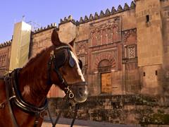 Córdoba - Trabajando junto a la Mezquita (damargo1983) Tags: córdoba calesa catedral caballo arco árabe fachada animales iglesia puerta luz light colores colors colours color arquitectura architecture mezquita sanildefonso puertadesanildefonso