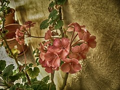 Flowers Other Style (BrajhanRivasOMG) Tags: flores paisje merida bellas rosas rosa mujeres plantas flowers pink new style april happy fence red blue countryside art