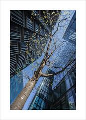 Mr Waidson's Tree (andyrousephotography) Tags: london 8thapril flickr meetup photography social chat grandtour morelondonriverside pwc batman building sunlight trees reflections glow golden