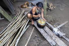 Kaxinawá - Huni kuin (CassandraCury) Tags: regiãoamazônica acre amazônia regiãonorte riojordão florestaamazônica rio águadoce índio índios aldeia aldeiaindígena jordão hunikuin kaxinawá caxinauá kashinawá indígena indígenas etnia povosindígenas povos mulher mulheres mulherindígena tribo cozinhando alimento caça animal fogo lenha