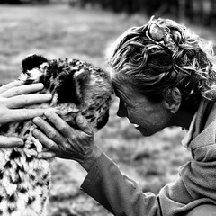 Stunning cat (pieterleroux3) Tags: zebula loving caring touch monochrome blackwhite blackandwhite interaction experience iphoneography shotoniphone honoured humble respect tame animal wildlife cheetah cat