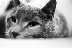 Old Man Gonzo no.4 (SopheNic (DavidSenaPhoto)) Tags: iso1600 50mmf18 cat hp5 monochrome gonzo selfdeveloped id1111 canonelan7e bw blackandwhite pushprocessed ilford film 35mmfilm