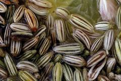 Macro Mondays - Seeds (macduff312) Tags: macromondays macro monday seed fennel tea stripe lemon herb herbal yellow black white green abstract art food drink bubbles canon d600 60mm lens closeup brown liquid