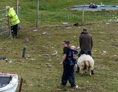 DSCN1521 (frankhound05) Tags: sheep ewe conor kate denis