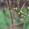 Green | Spring (Jenny Hoo) Tags: nature newyork whiteflower 花 绿叶 植物 春天 纽约 warm colorful howbeautiful photograhpy canon