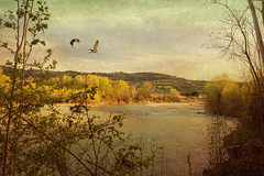 River view... (bluepeter_59) Tags: river fiume panorama vista view water