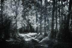 """The secret path..."" (Ilargia64) Tags: forest magic light monochrome blackandwhite trees woods sunset landscape path amayasanchez"
