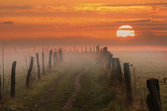 In my dreams...explore (Rita Eberle-Wessner) Tags: landscape landschaft path weg feldweg zaun fence gras grass meadow weide sunrise morning morgen sun sonne sky himmel morgenrot nebel fog morgennebel odenwald orange sonnenaufgang wiese
