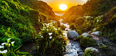 Garrapata Creek - Big Sur. CA (Ian P. Miller Photography) Tags: bigsur calle lillies sunset color landscape green spring water ocean dji phantom4