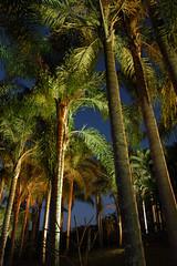 DSC_4385 (alaluxluz) Tags: iluminaçãosustentável projetosluminotécnicos projeção3d equipamentosdeiluminação iluminaçãoresidencial iluminaçãocomercial iluminaçãodejardim iluminaçãosubaquática iluminaçãocênica iluminaçãoteatral iluminaçãodeteatro iluminaçãodepaisagismo lustres lustresdecristal pendentes plafons arandelas abajures colunas apliques embutidos embutidosdesolo embutidosdeparede alabastros luminárias lumináriasdeemergência filtros gelatinas difusores fresnel fresnéis gobos lentes aletas defletoresdeluz acessóriosdeiluminação spots trilhos balizadores refletores projetores postes tartarugas fincosdejardim espetosdejardim cúpulas canoplas vidros globos cristais strobos movingheads lâmpadas lâmpadasespeciais lâmpadasdexenonresidencial lâmpadasdecarbono lâmpadasdegrafeno máquinasdefumaça fitasadesivas led painéisdeled oled fitasled fibraótica automação dimmers controladoresdeluz decoração designdeiluminação lightingdesign lightingfixtures decorativelighting lightingpendants alalux