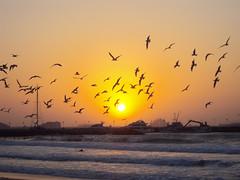 Seagulls in a Dubai sunset - AdrianBertschiPhotography (Adrian Bertschi Photography) Tags: dubai sunset seagulls atlantis sea waves yachts ships adrianbertschiphotography