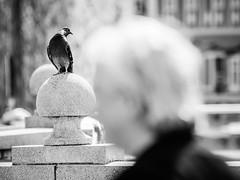 Watching (Zlatko Parmakovski) Tags: blackandwhite monochrome street streetphotography people bird bokeh nikkor nikon europe