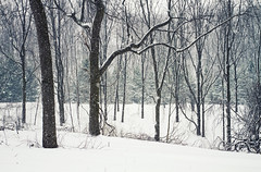 Repetition. (Matt Champlin) Tags: snow snowing snowstorm cold chilly old history home skaneateles cny wintertime pristine covered woods woodland frogpond 2017 canon barn beautiful rural country